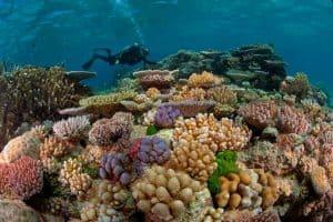 arrecifes de australia