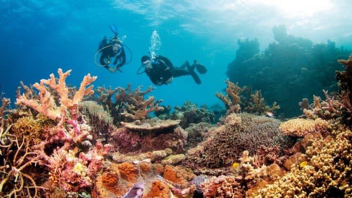 La Gran Barrera de Arrecifes que se encuentra en Australia está en peligro