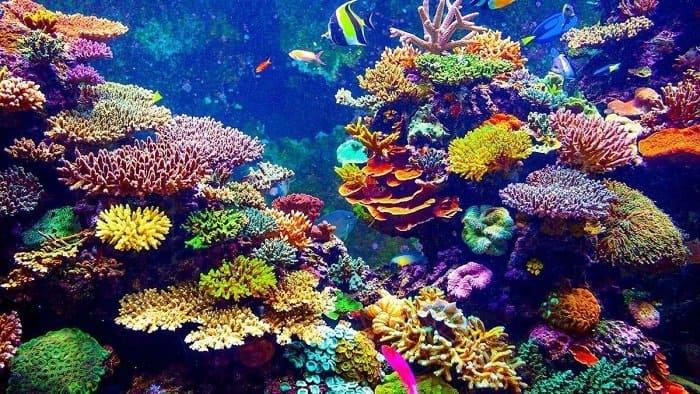 Arrecifes de coral: ¿Por qué son importantes?