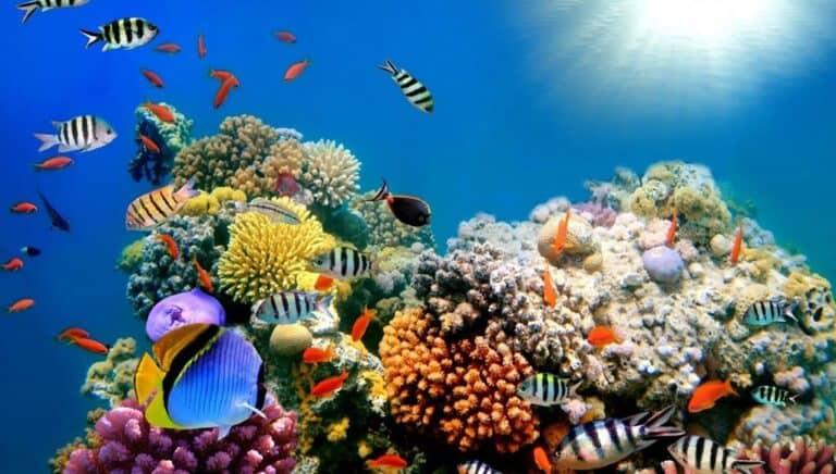 peces nadando alrededor de arrecifes de coral